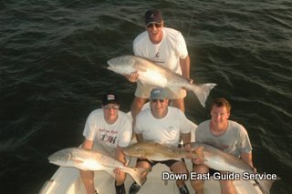 red drum or redfish in Neuse River and Pamlico Sound